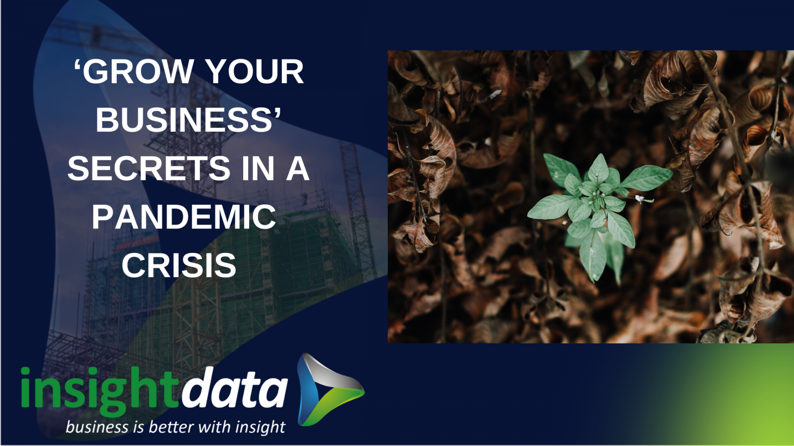 'GROW YOUR BUSINESS' SECRETS IN A PANDEMIC CRISIS article representing Insight Data